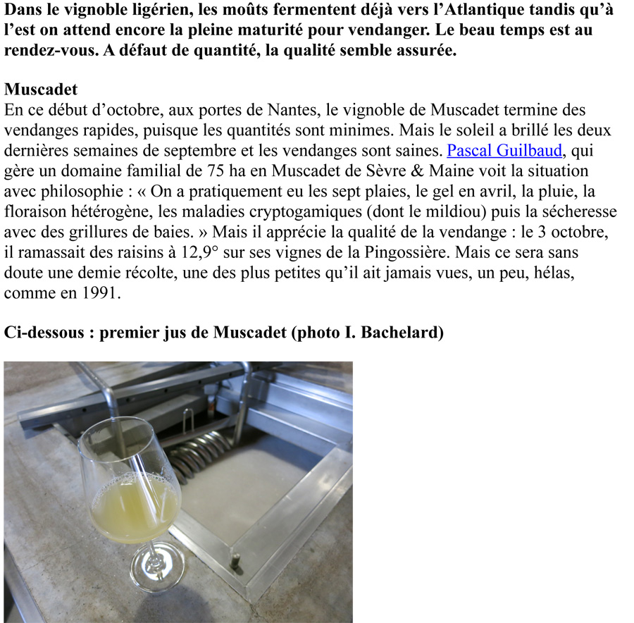 Article_TERRE_DE_VIN.jpg